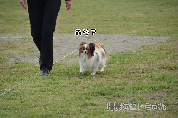 春季競技会 ヒトミさんDSC_4153