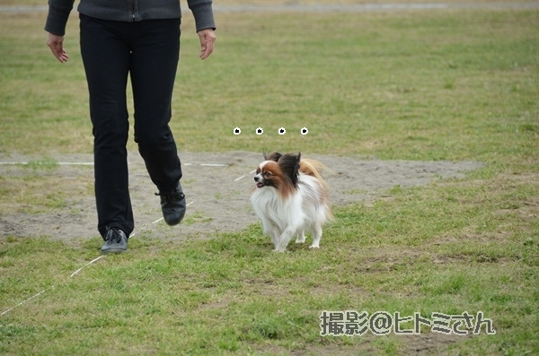 春季競技会 ヒトミさんDSC_4151