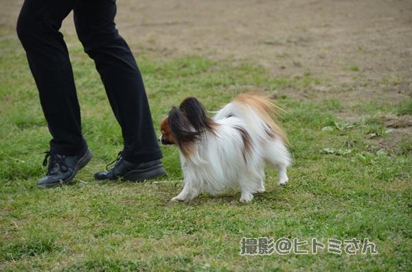 春季競技会 ヒトミさんDSC_4270