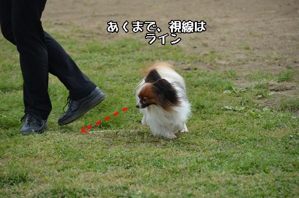 春季競技会 ヒトミさんDSC_4269