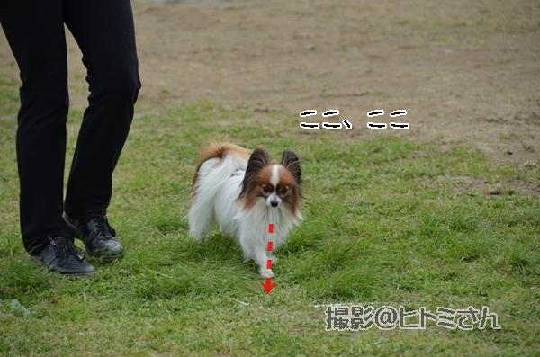 春季競技会 ヒトミさんDSC_4266