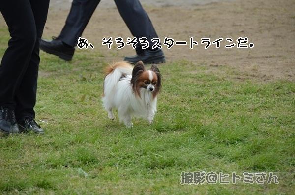 春季競技会 ヒトミさんDSC_4264