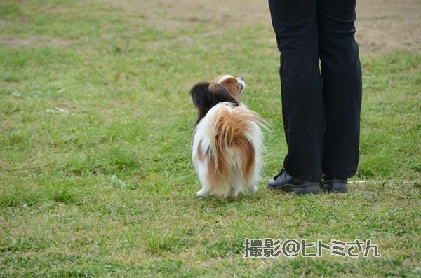 春季競技会 ヒトミさんDSC_4275