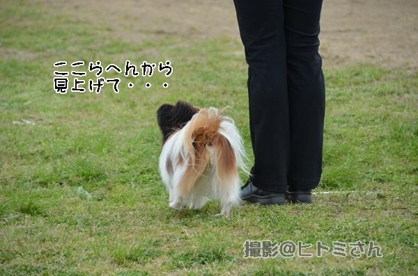 春季競技会 ヒトミさんDSC_4274