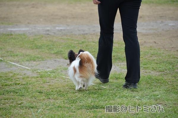 春季競技会 ヒトミさんDSC_4287