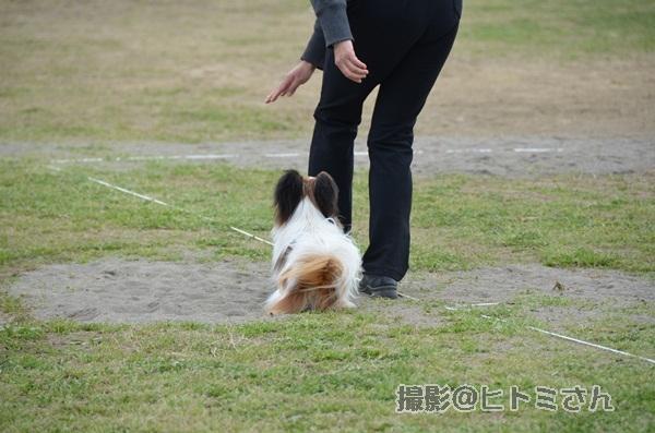 春季競技会 ヒトミさんDSC_4296