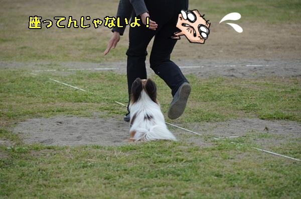 春季競技会 ヒトミさんDSC_4298