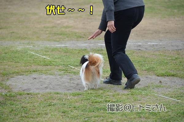 春季競技会 ヒトミさんDSC_4294