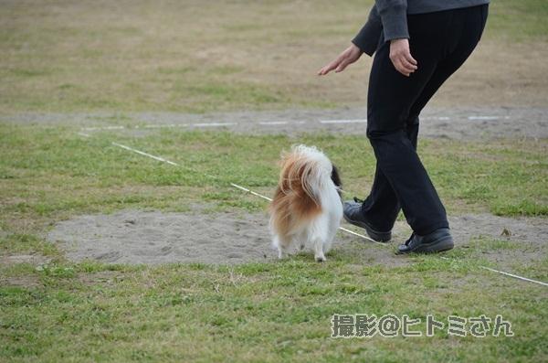 春季競技会 ヒトミさんDSC_4293