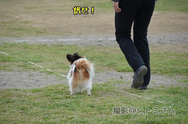 春季競技会 ヒトミさんDSC_4290