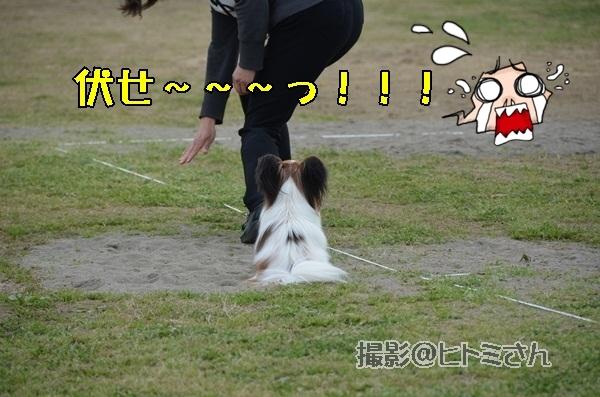 春季競技会 ヒトミさんDSC_4301