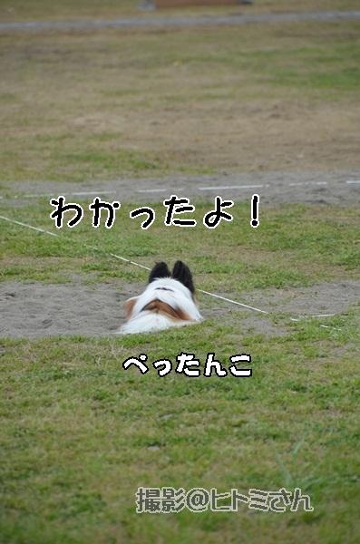 春季競技会 ヒトミさんDSC_4302