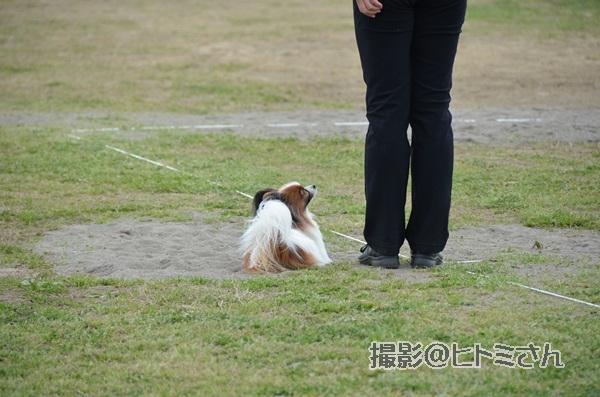 春季競技会 ヒトミさんDSC_4304