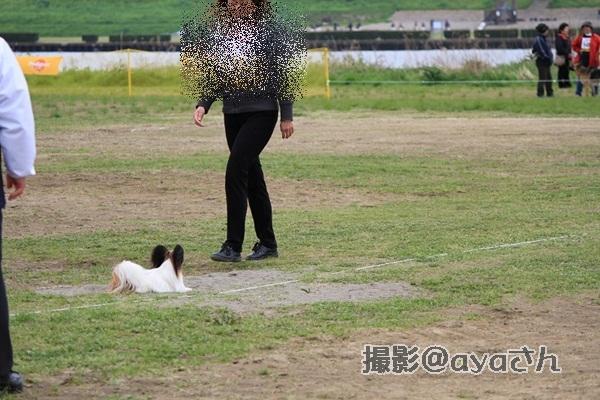 春季競技会 ayaさん20120422_155_org