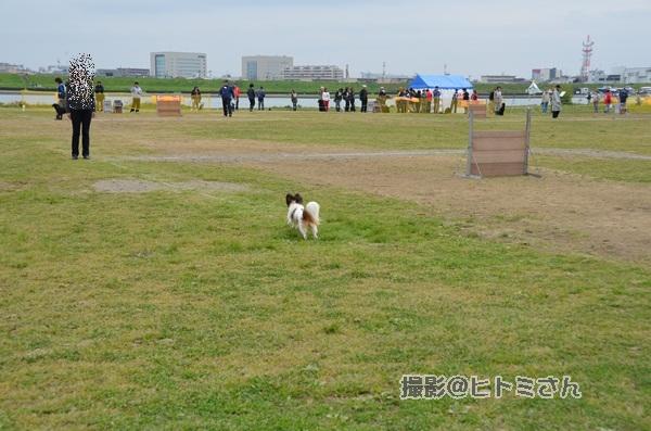 春季競技会 ヒトミさんDSC_4230