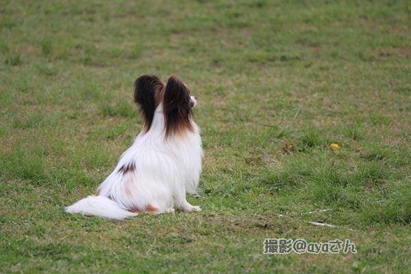 春季競技会 ayaさん20120422_166_org