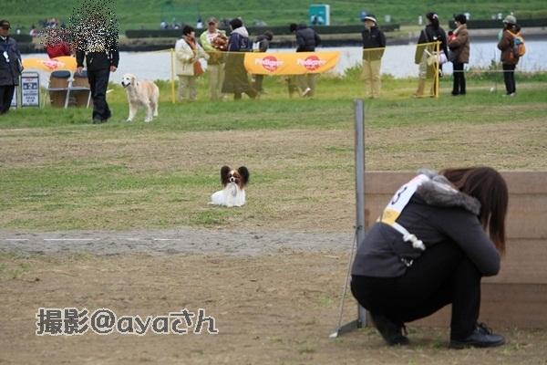 春季競技会 ayaさん20120422_191_org