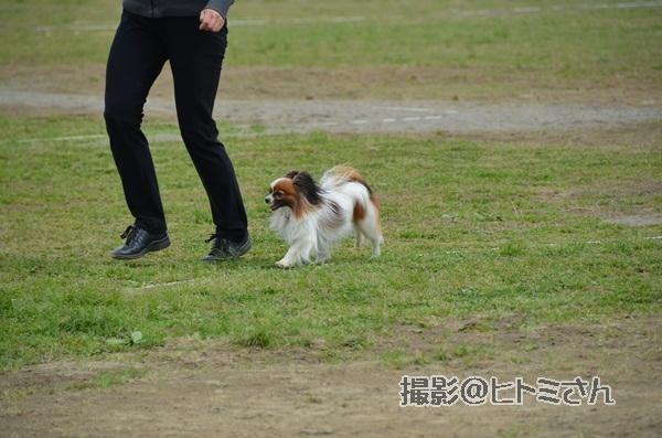 春季競技会 ヒトミさんDSC_4218