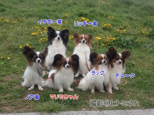 春季競技会 ヒトミさんIMG_4735