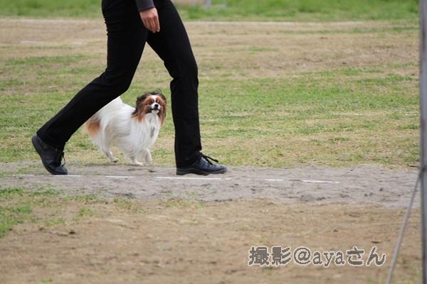 春季競技会 ayaさん20120422_087_org