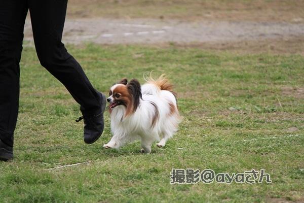 春季競技会 ayaさん20120422_123_org