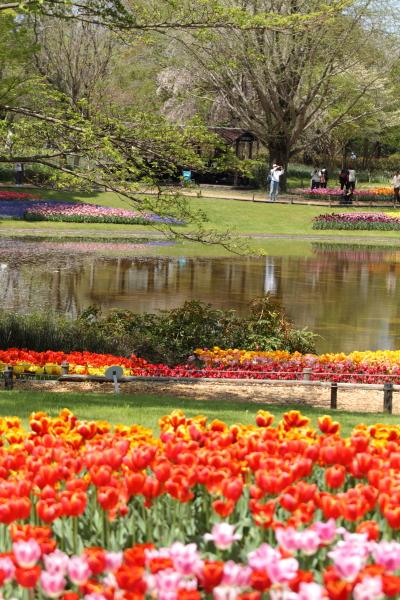 昭和記念公園 ブログサイズ0076