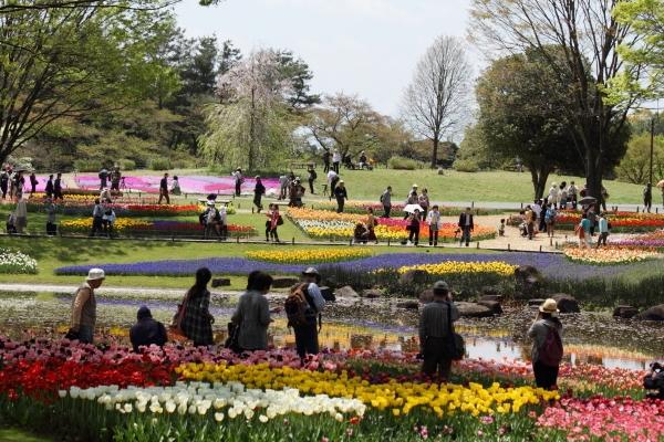 昭和記念公園 ブログサイズ0093