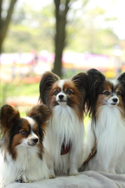 昭和記念公園 ブログサイズ0126