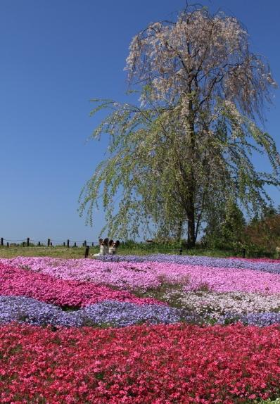 昭和記念公園 ブログサイズ0009