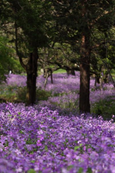 昭和記念公園 ブログサイズ0209