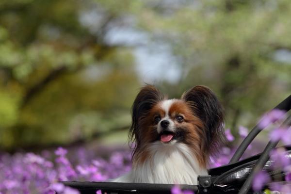 昭和記念公園 ブログサイズ0175