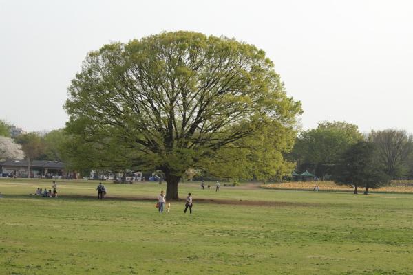 昭和記念公園 2012 2-2 0030