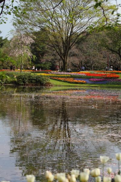 昭和記念公園 ブログサイズ0214