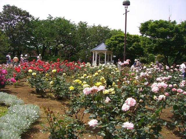 2009_05_15 015 小