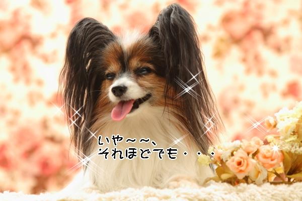 撮影会 ブログサイズ0028