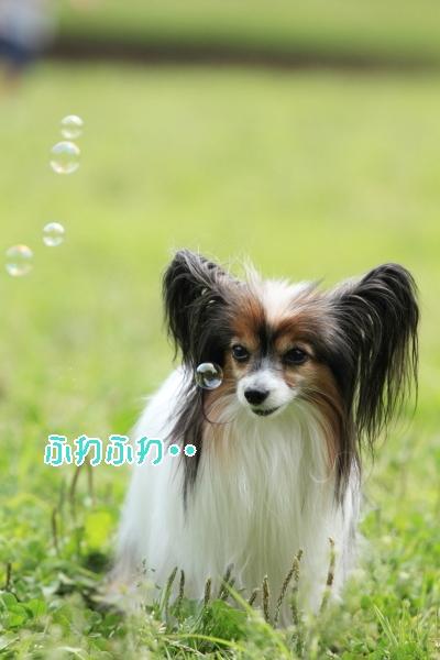撮影会 ブログサイズ0200
