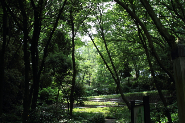 公園はしご0053