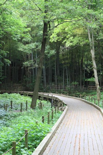 公園はしご0049