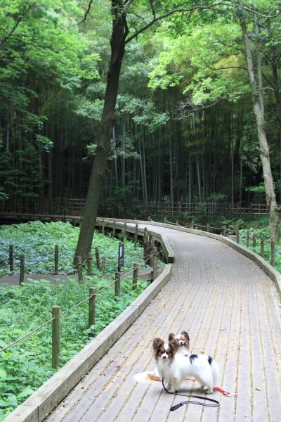 公園はしご0050