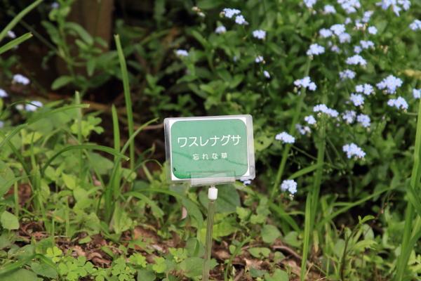 公園はしご0038