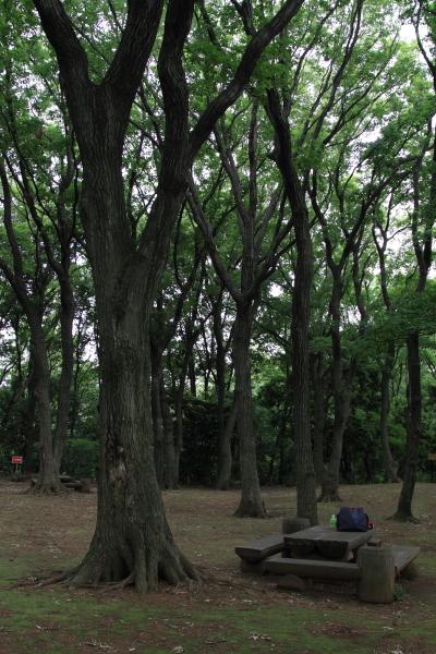 公園はしご0063