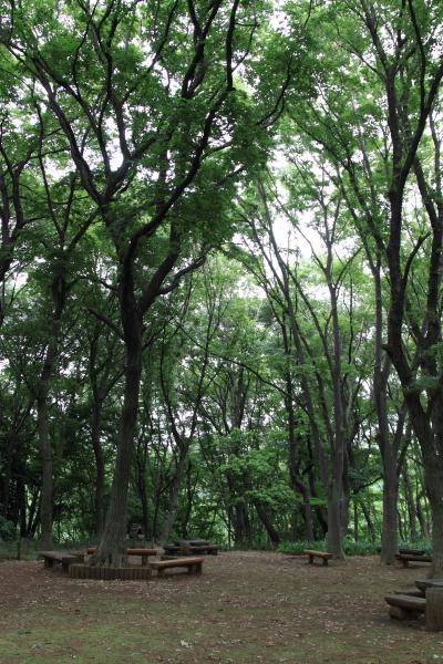 公園はしご0067