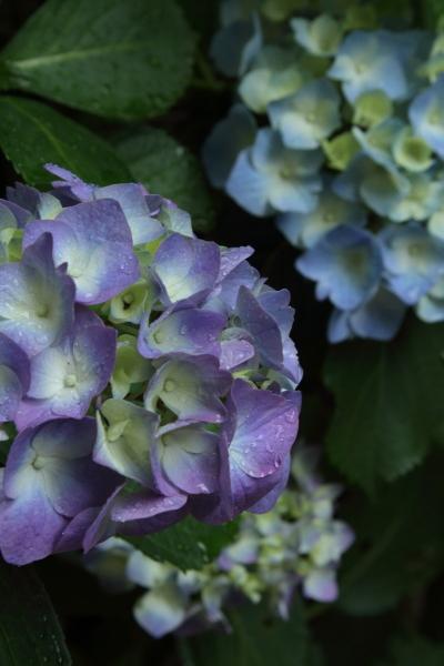 雨の庭 ブログ0022