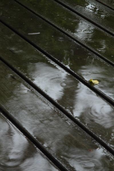 雨の庭 ブログ0028