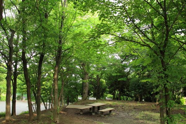 お散歩 ブログ0032