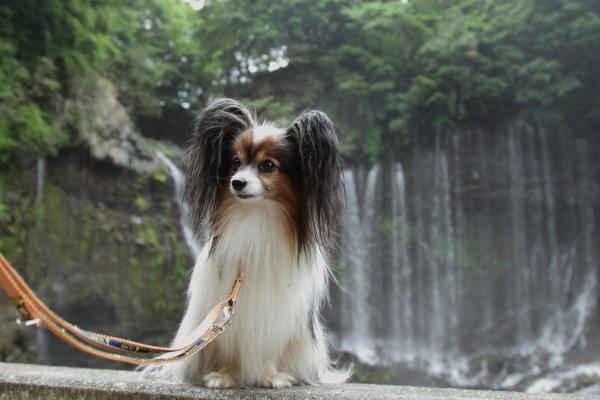 田貫湖 ブログ0096
