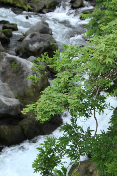 田貫湖 ブログ0141