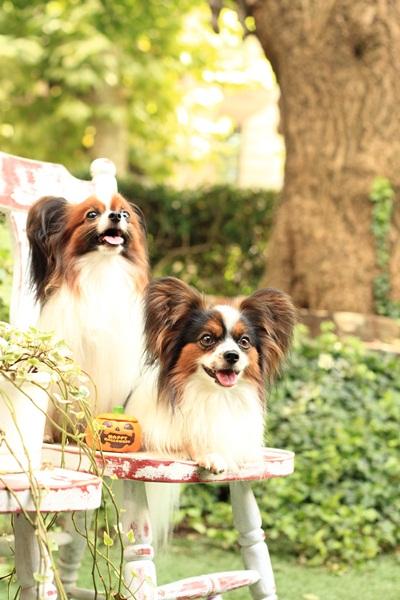 2011_09_12 EOS犬撮影DPP_0364
