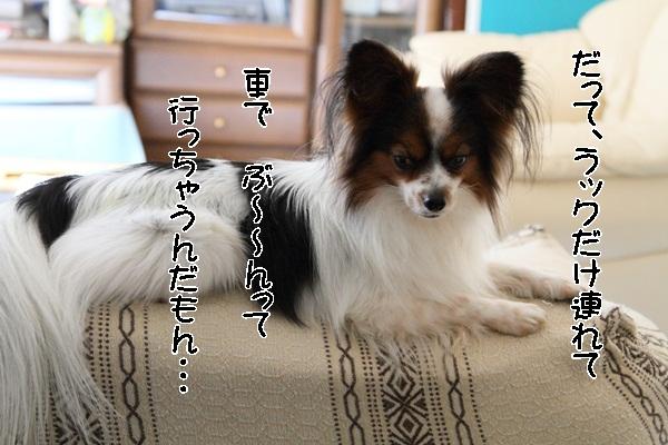 2012_01_13 去勢3日後DPP_0004