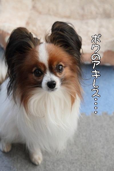 2012_01_13 去勢3日後DPP_0006